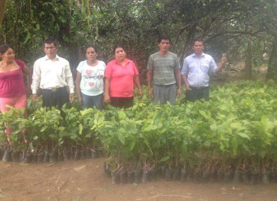 Cadena productiva Cacao fino de aroma